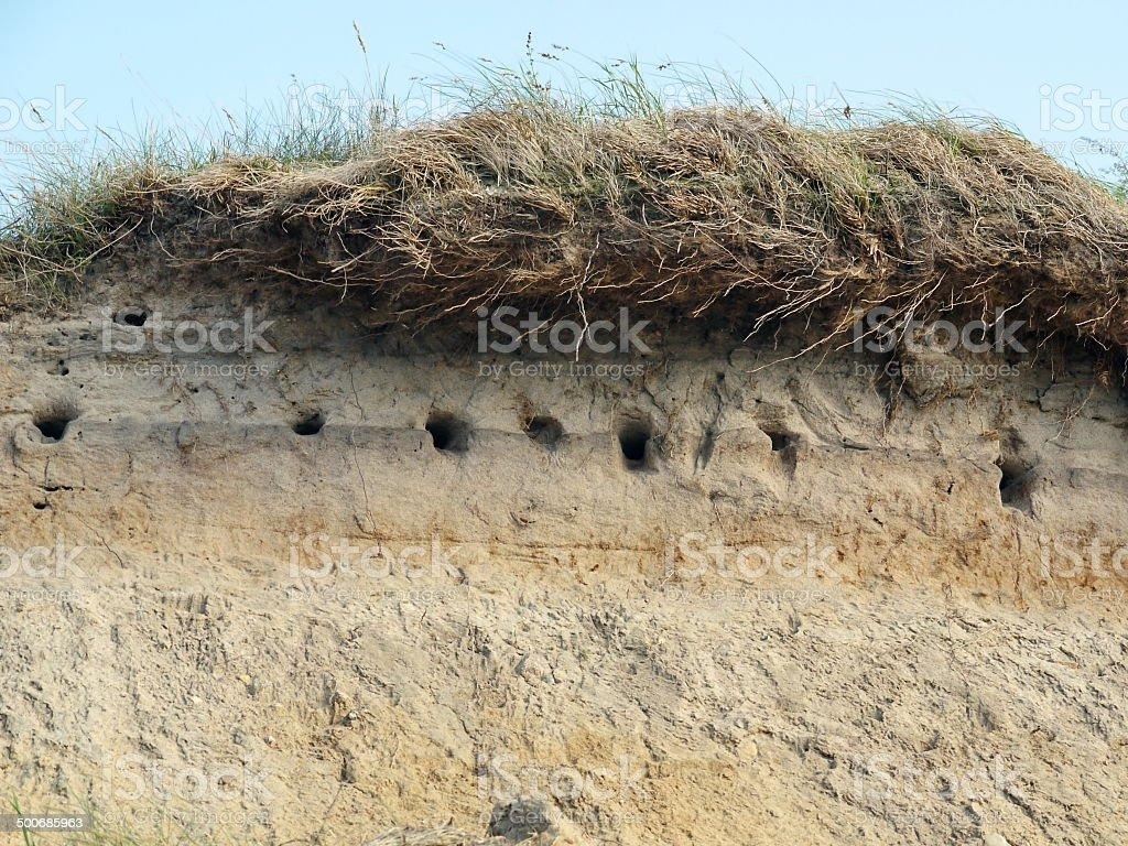 sand martin nest on the beach stock photo