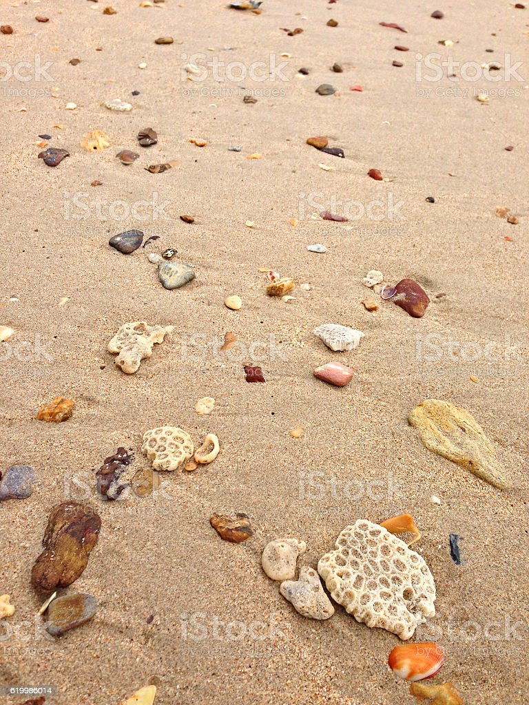 Sand on beach full of seashells, stone, brain coral stock photo
