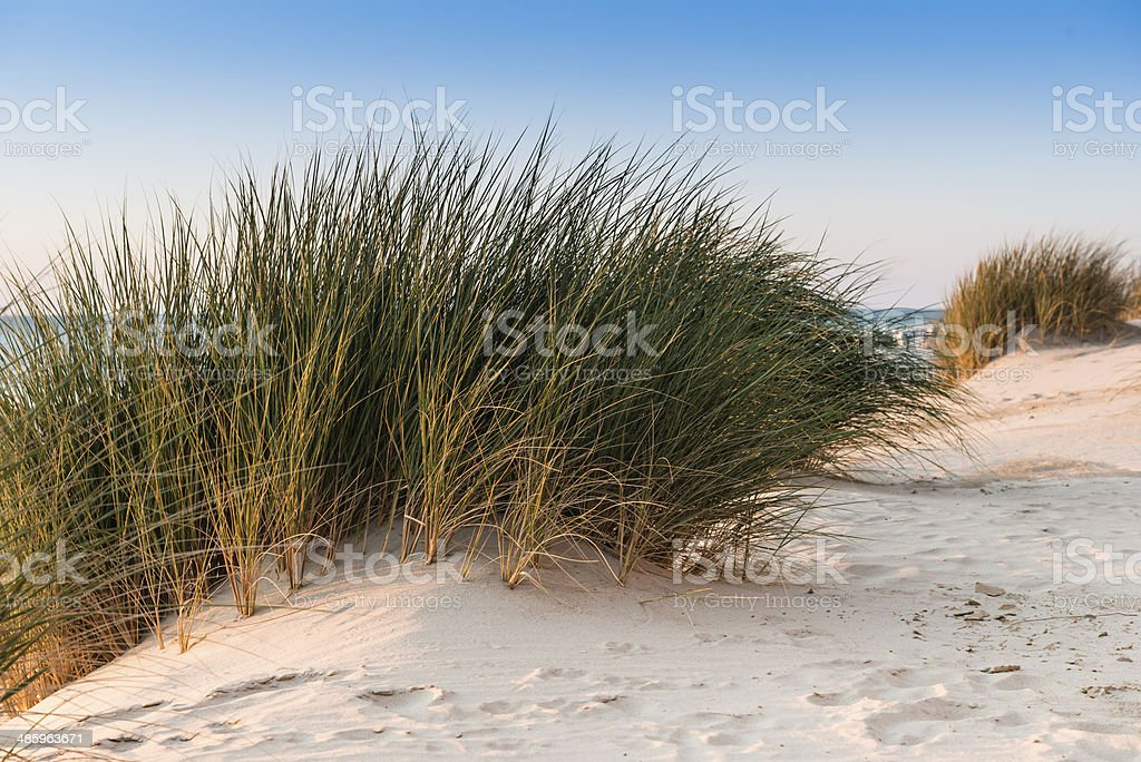 Sand path over dunes with beach grass. stock photo