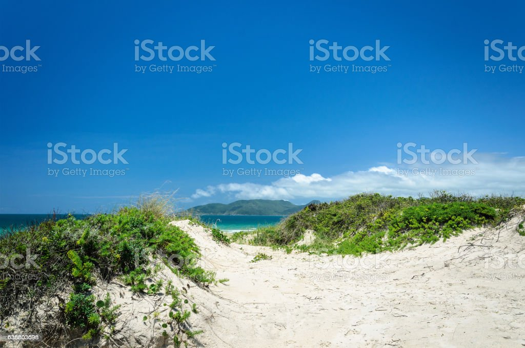 Sand path to the blue ocean stock photo