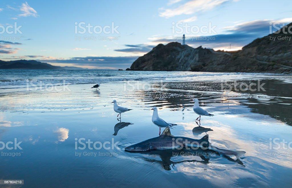 Sand Shark stock photo