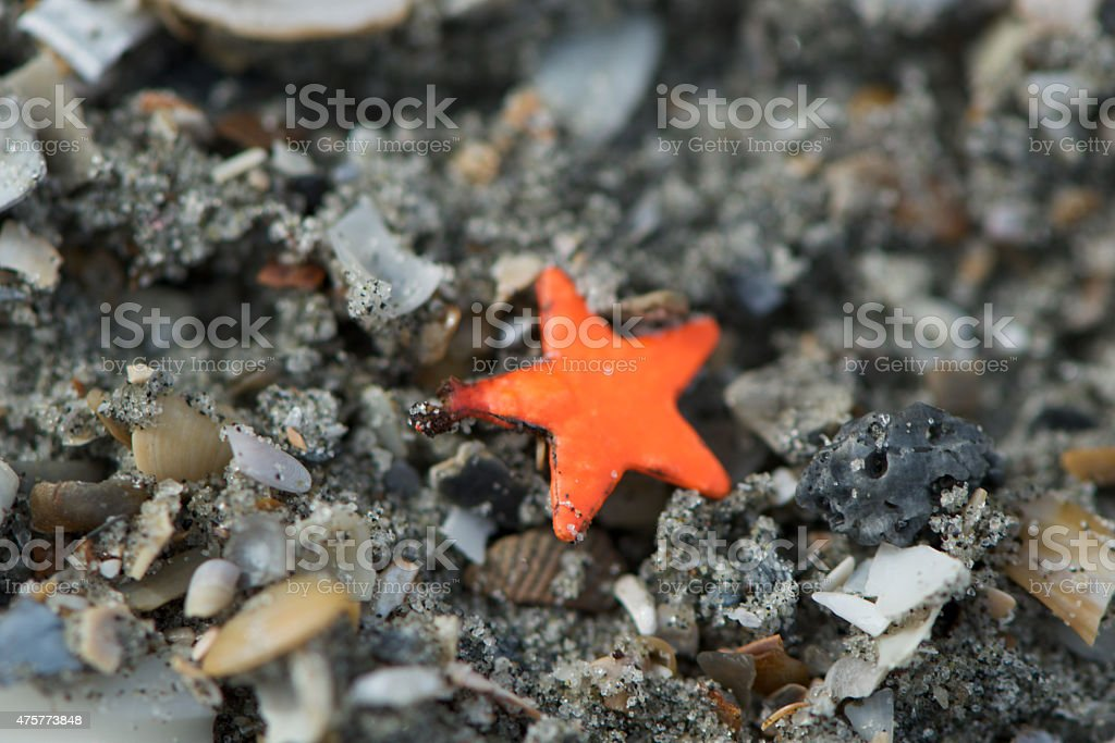 Sand Star stock photo
