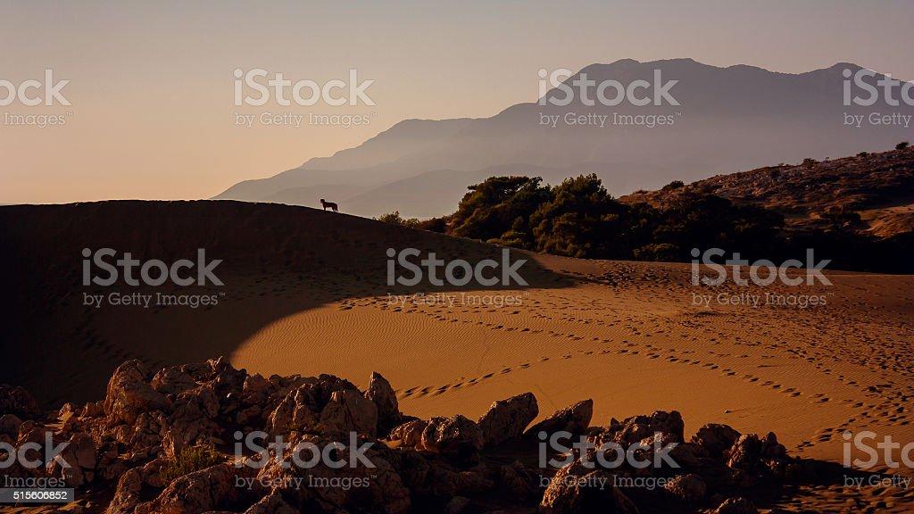 Sand sunset stock photo