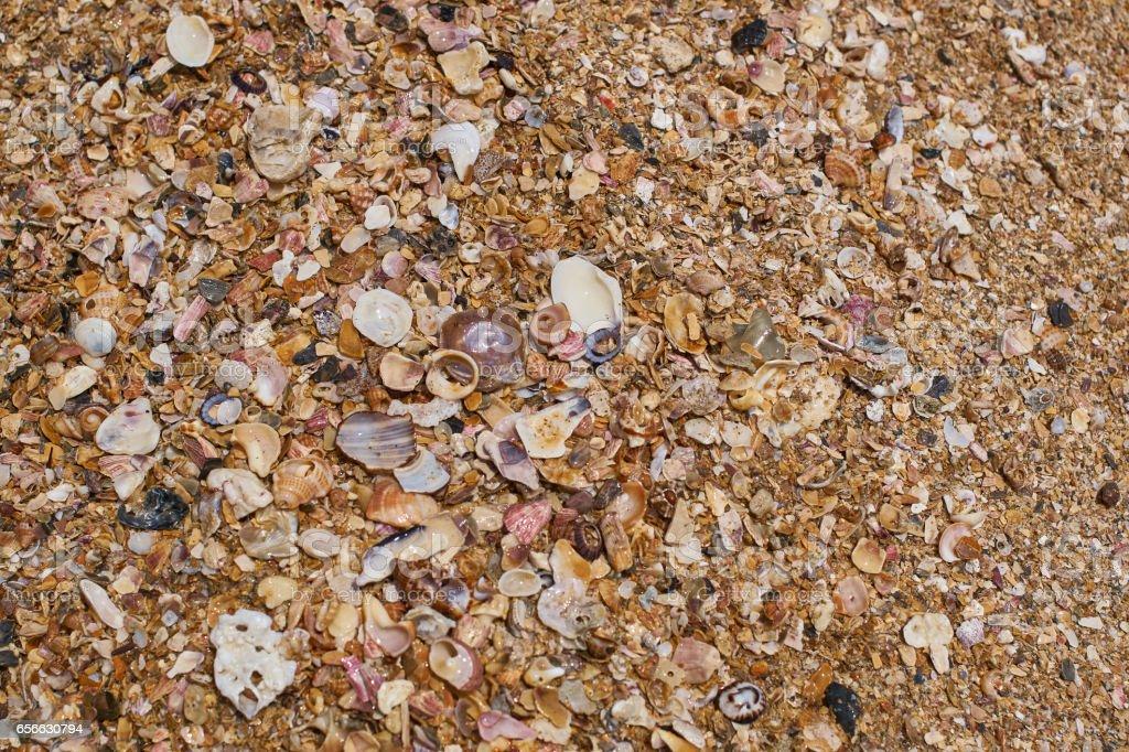 Sand_Shells_top stock photo