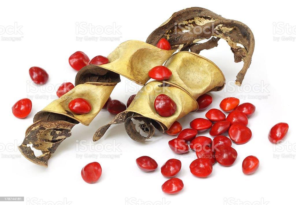 Sandalwood Seeds royalty-free stock photo