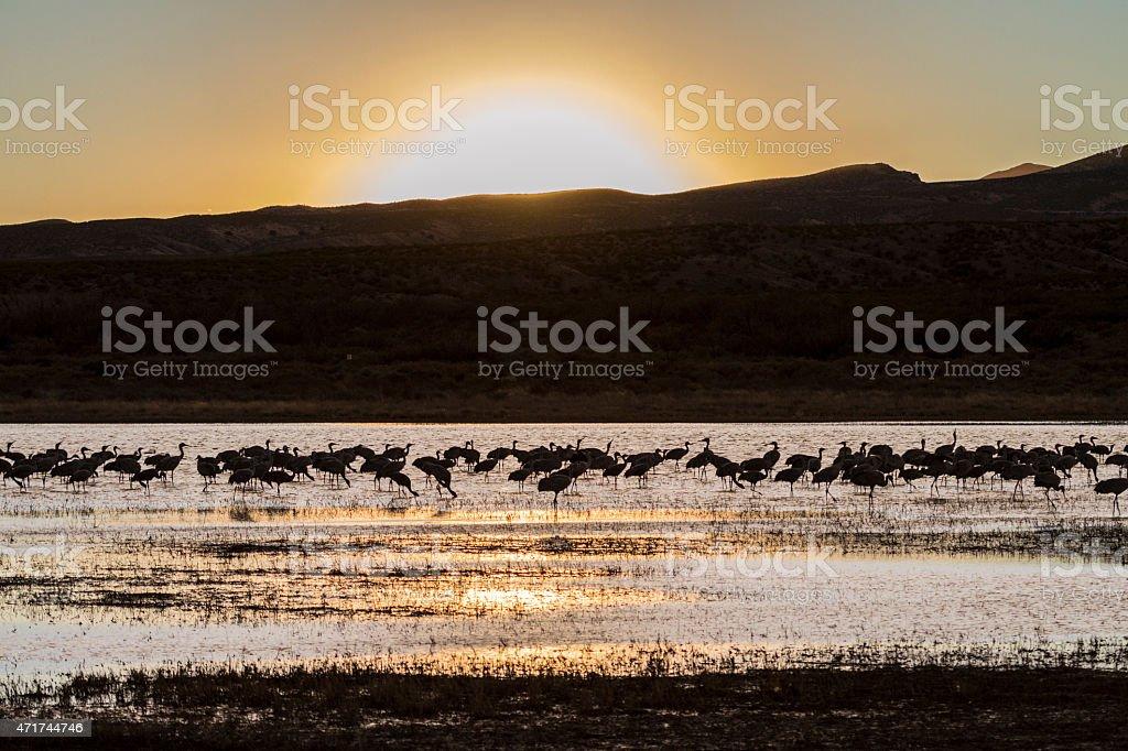 Sandhill Cranes and setting sun stock photo
