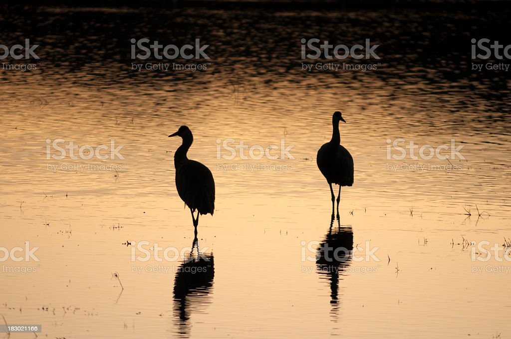 sandhill cranes silhouette at sunset royalty-free stock photo