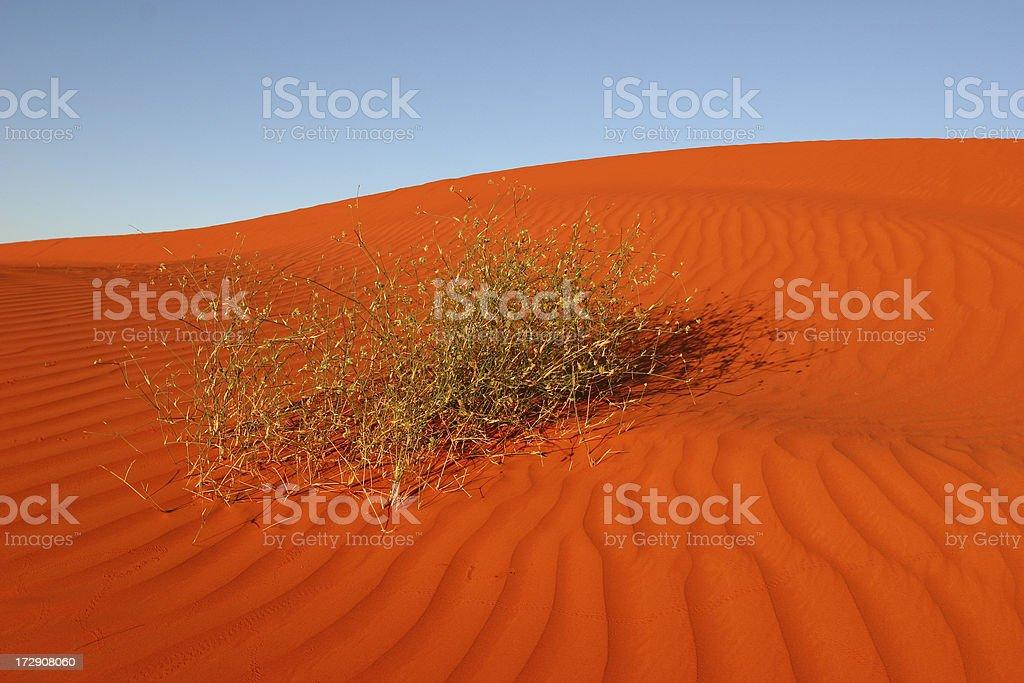 Sandhill stock photo