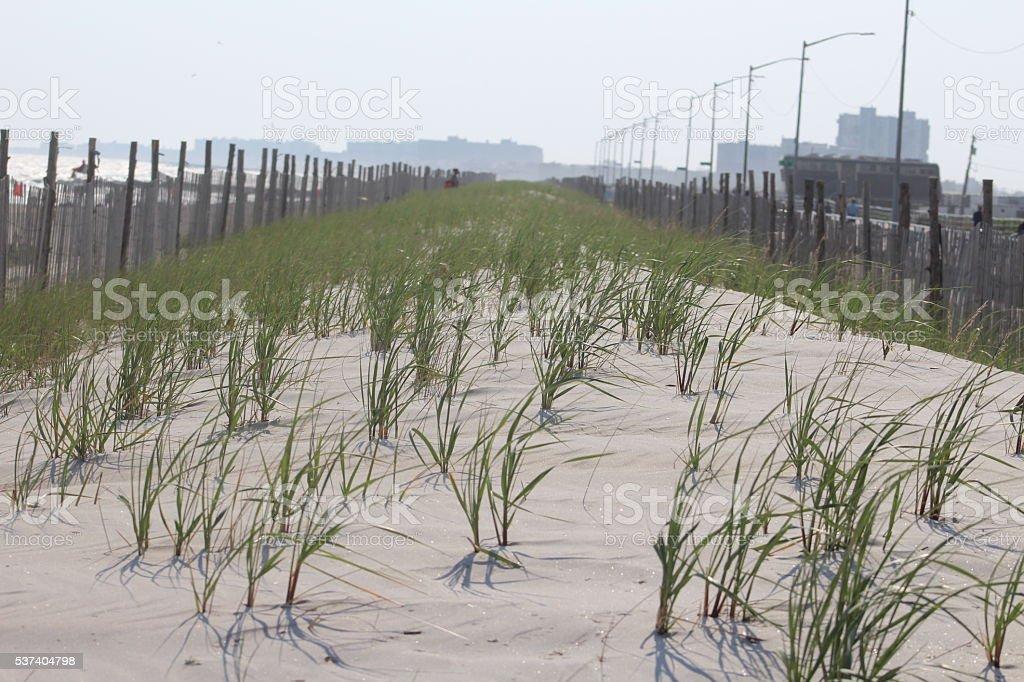 Sandy Beach Dunes stock photo