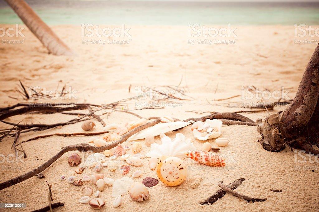 sandy beach shells vintage stock photo