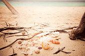 sandy beach shells vintage