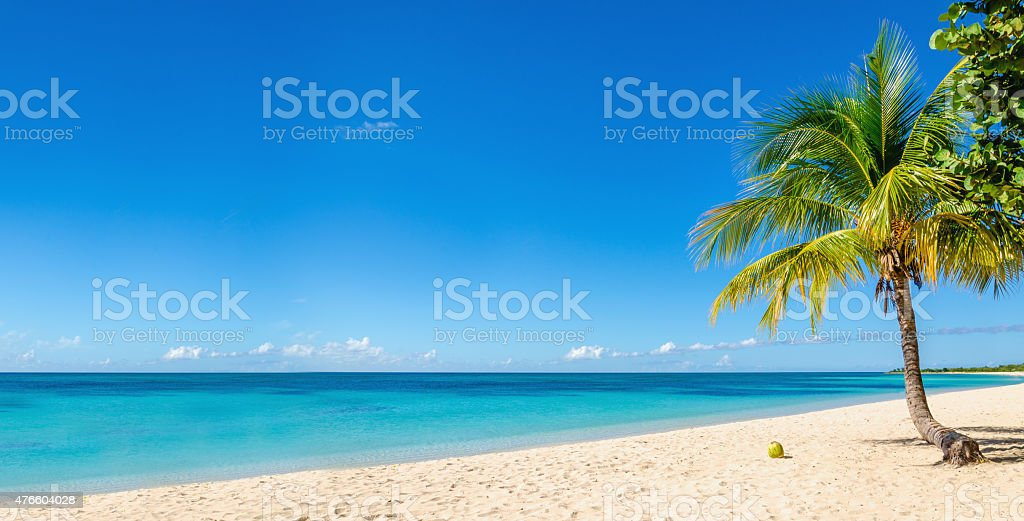 Sandy beach with coconut palm, Caribbean Island stock photo