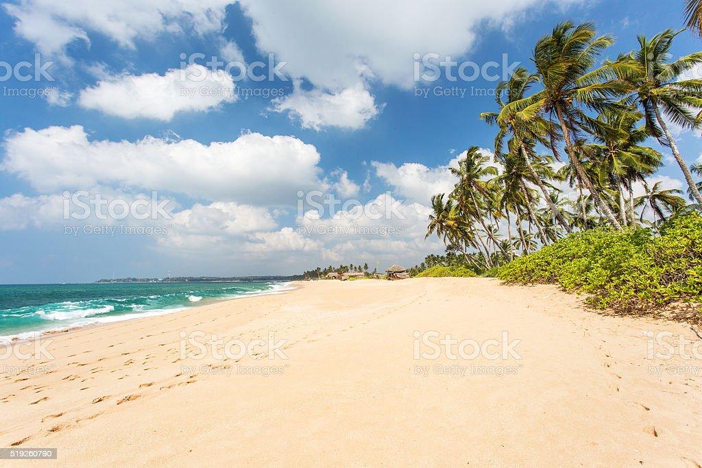 Sandy beach with palm trees. Sri Lanka stock photo