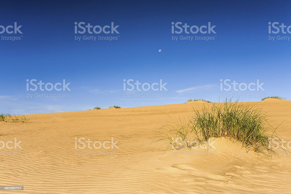 Sandy dune with plants and sky. stock photo