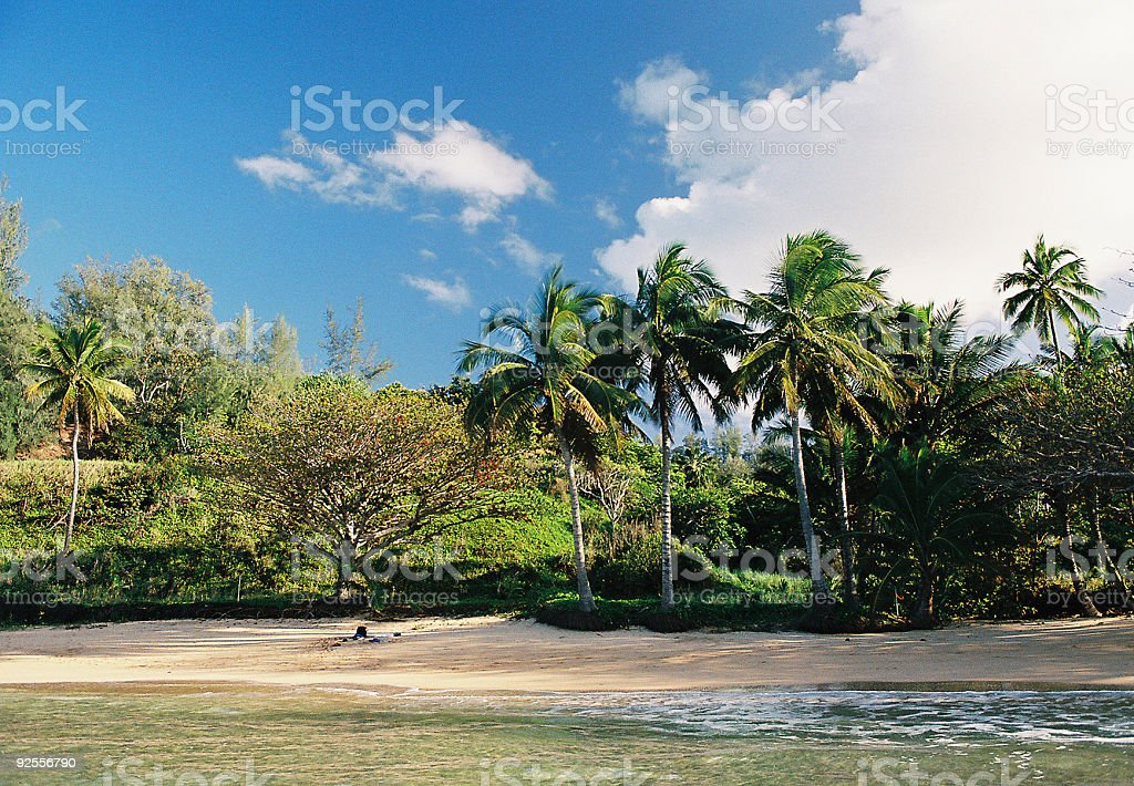 Sandy Hawaii beach and palm trees stock photo