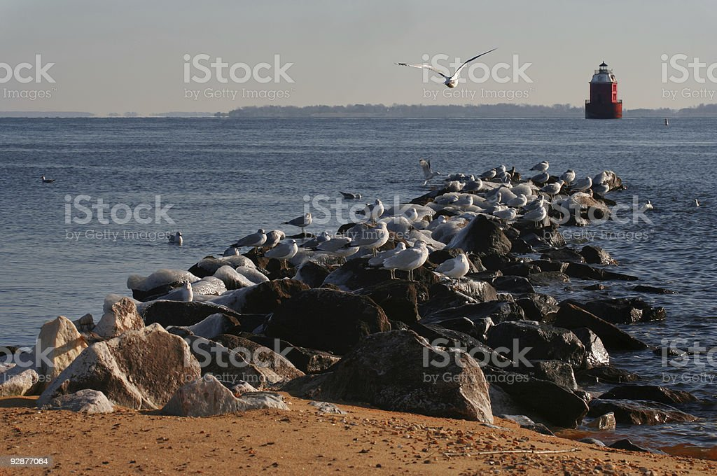 Sandy Point Lighthouse and Seagulls royalty-free stock photo