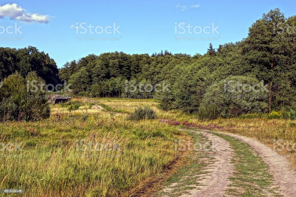 Sandy road in the meadow in front of the edge of the green forest stock photo