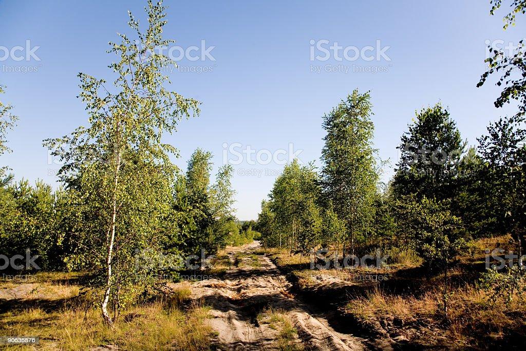 Sandy road stock photo