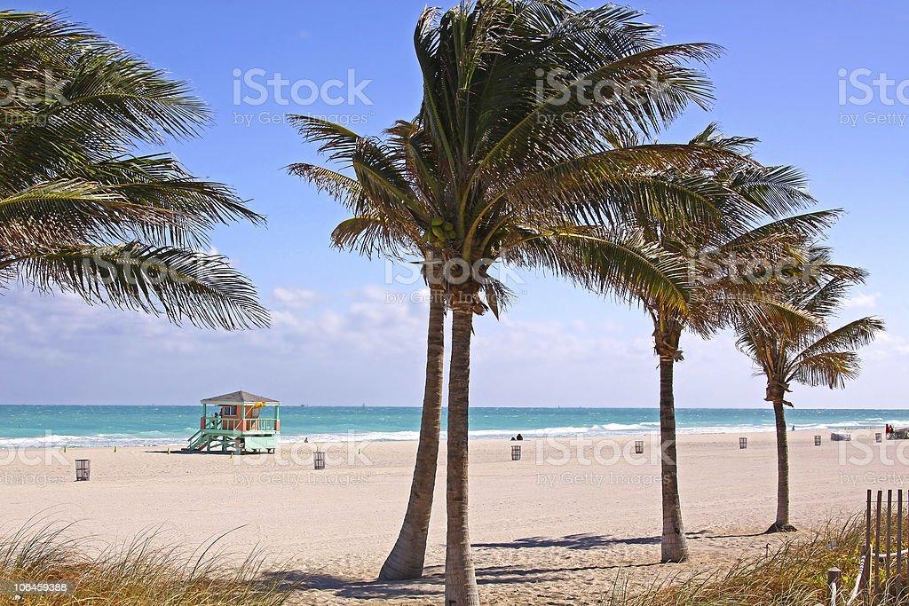 Sandy South Miami Beach Florida with Plams royalty-free stock photo