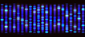Sanger Sequencing Background