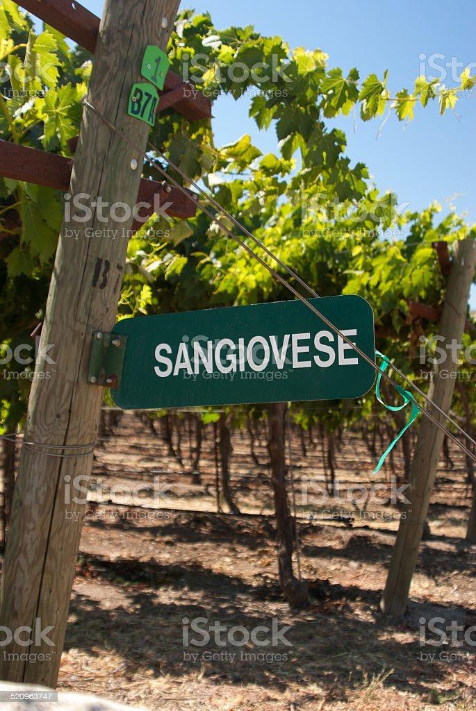 Sangiovese Signpost of California stock photo