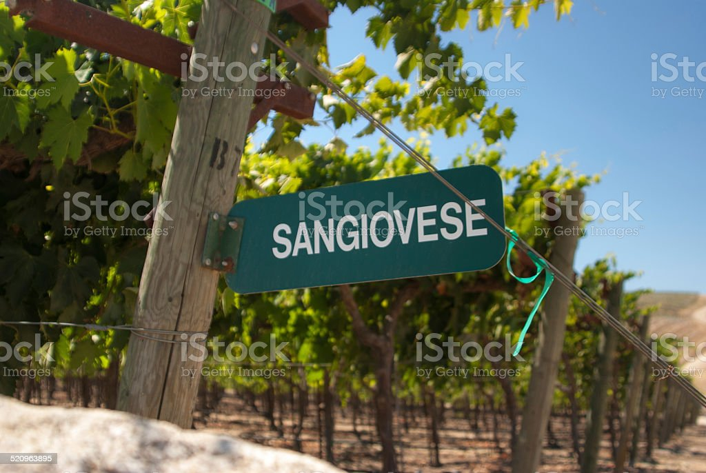 Sangiovese Signpost stock photo
