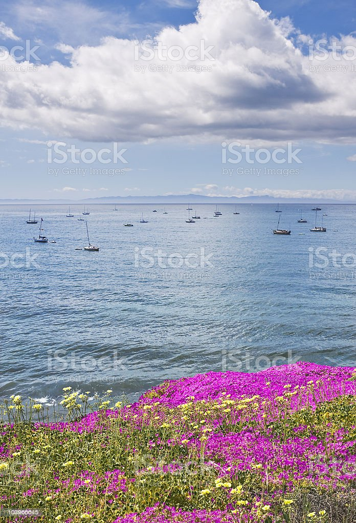 Santa Barbara Anchorage and Flowers stock photo