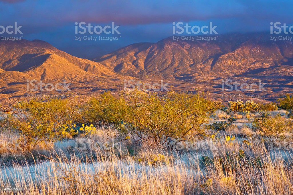 Santa Catalina Desert stock photo