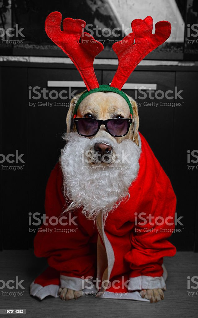 Santa Claus Dog stock photo