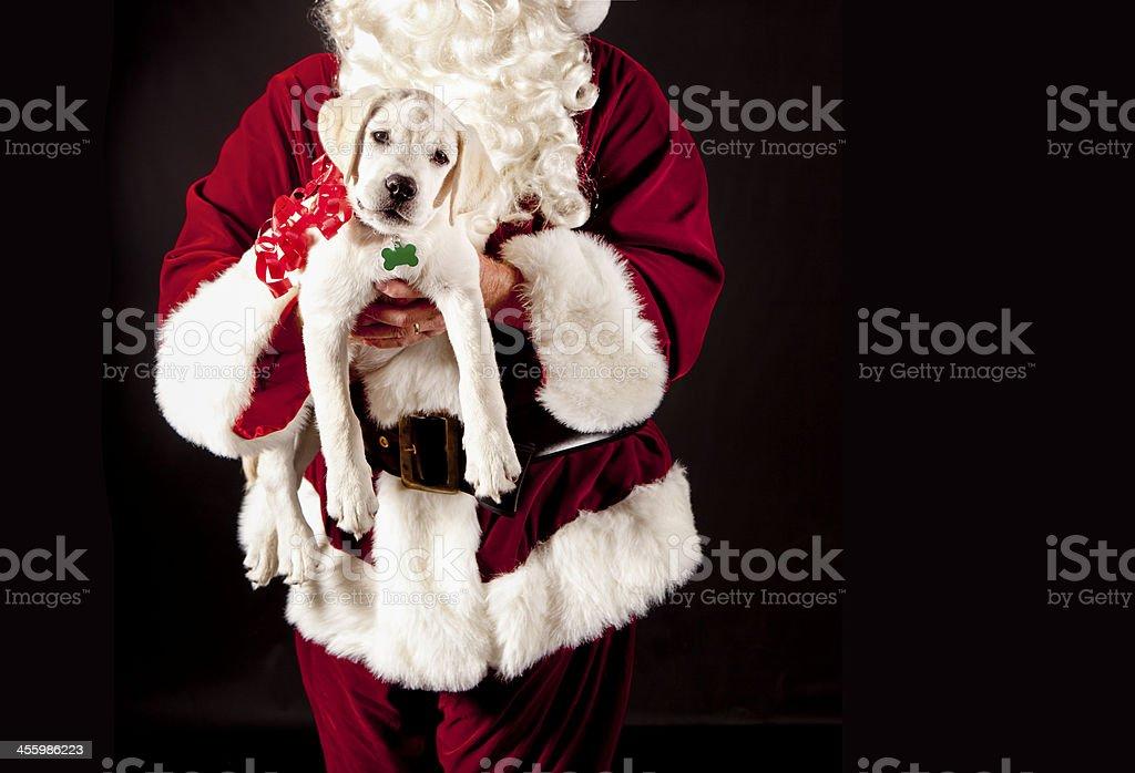 Santa Claus Giving a Puppy Christmas Present stock photo