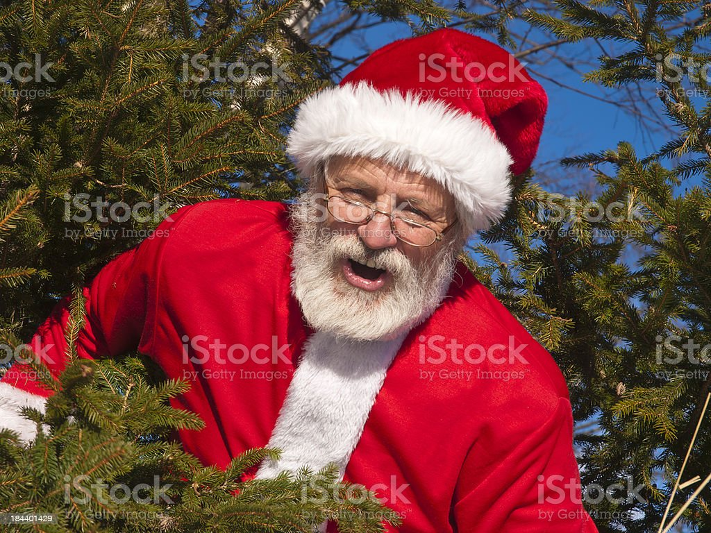 Santa Claus in the forest stock photo