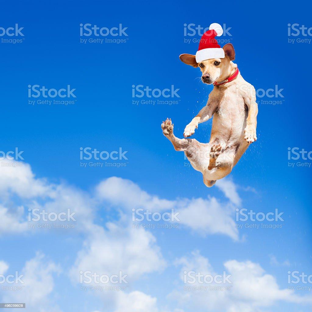 santa claus  jumping dog stock photo