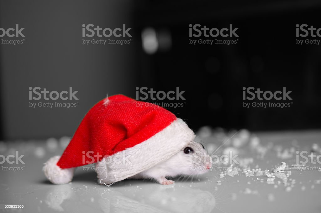 Santa Claus Mouse stock photo