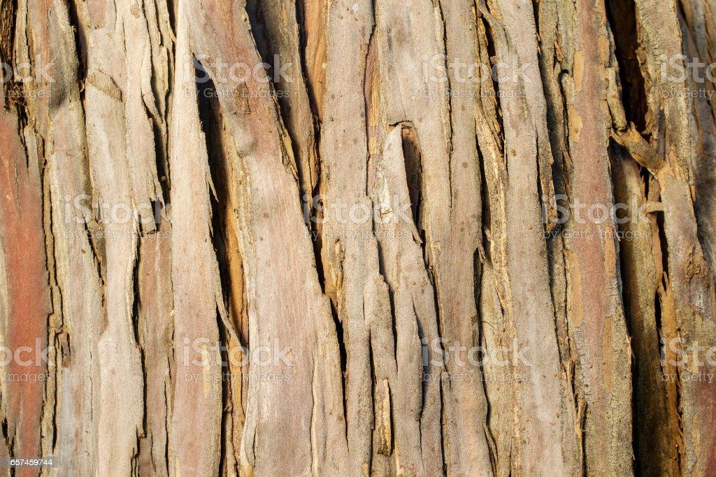 Santa Cruz Island Ironwood  background stock photo