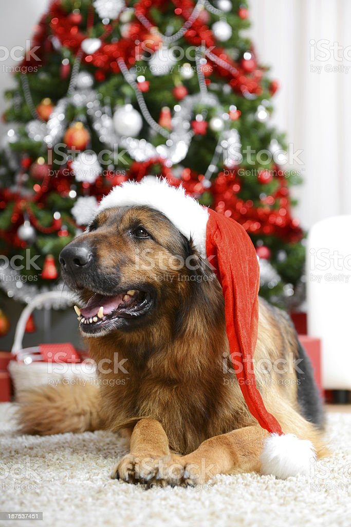 Santa Dog royalty-free stock photo
