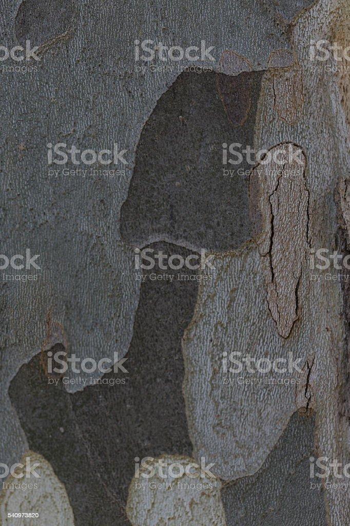 Santa Fe de Montseny, Barcelona, Spain stock photo
