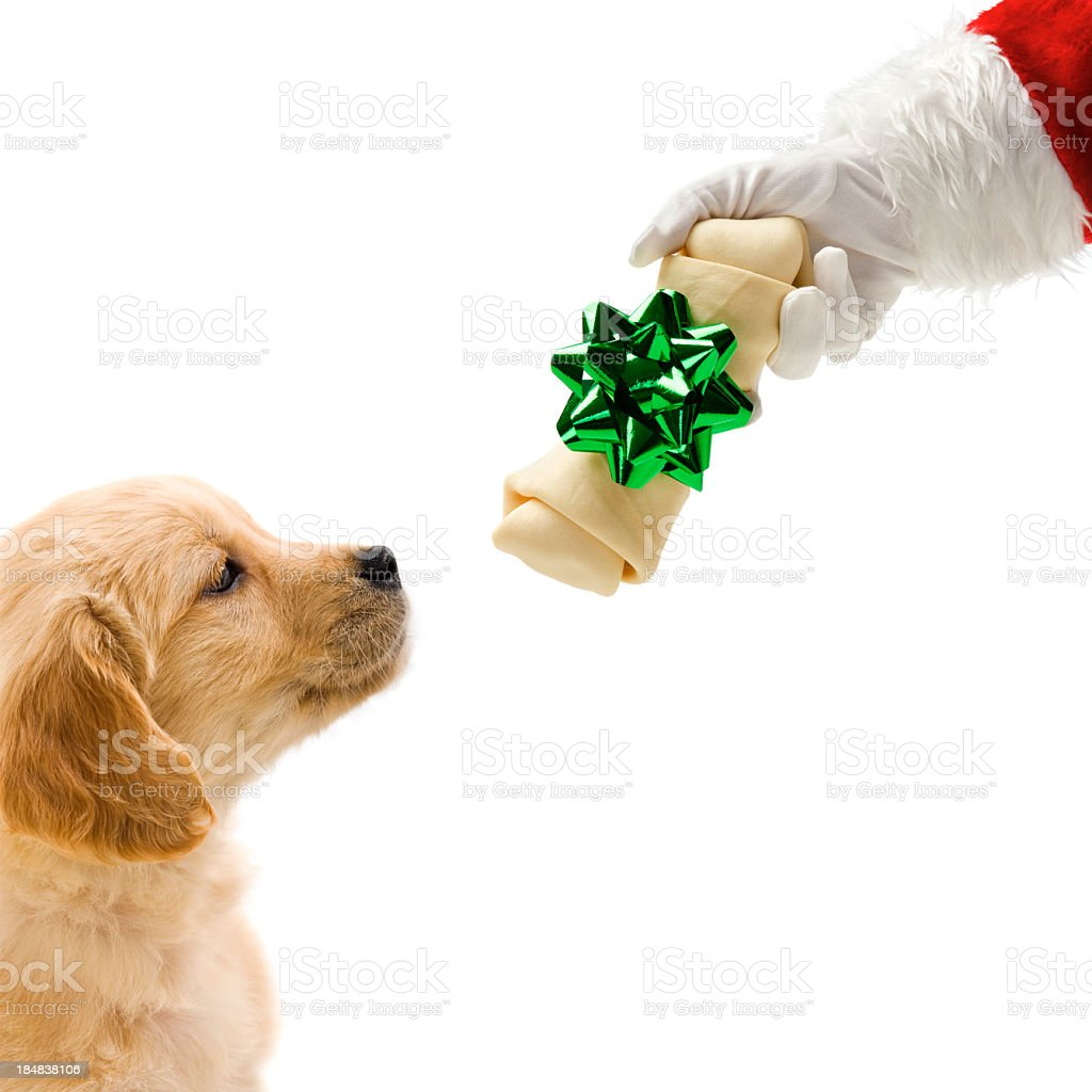 Santa giving a wrapped bone to puppy stock photo