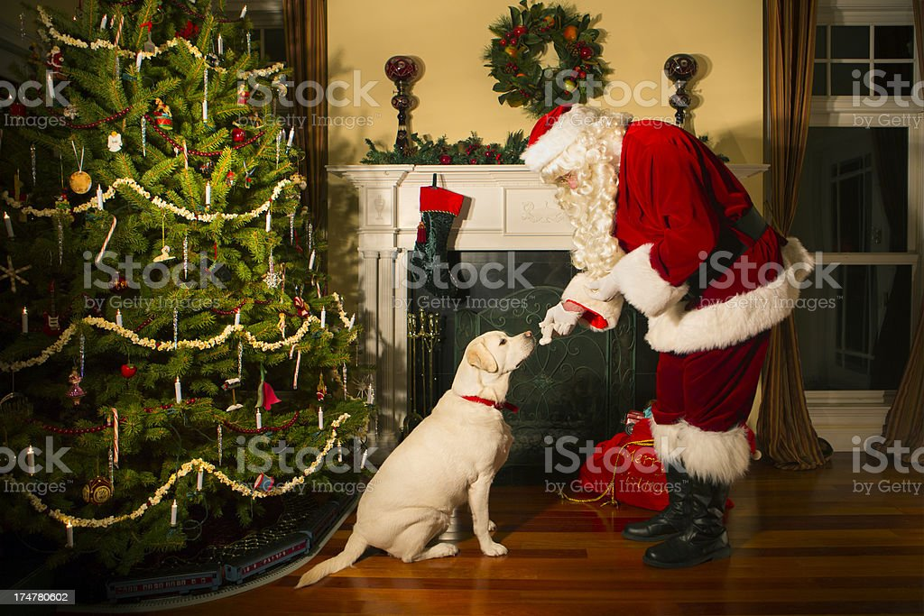 Santa giving the family dog a bone stock photo
