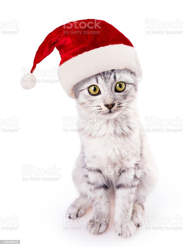 santa hat cat stock photo