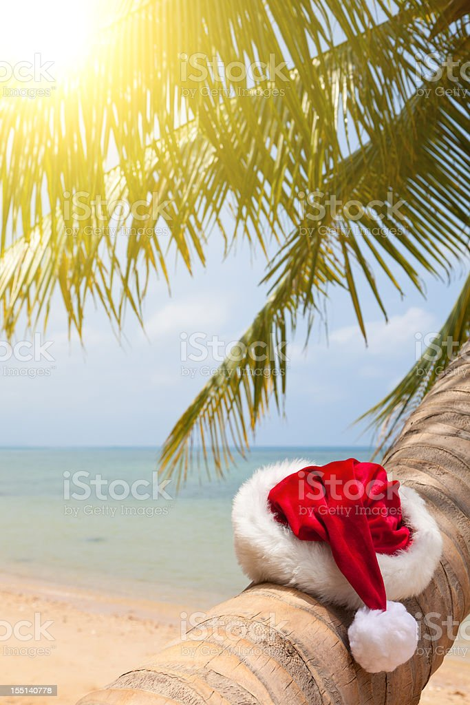 Santa hat sitting on a palm tree royalty-free stock photo