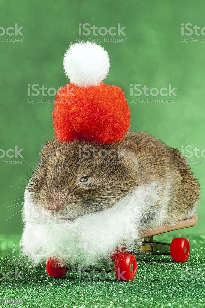 Santa Is Really A Mouse stock photo