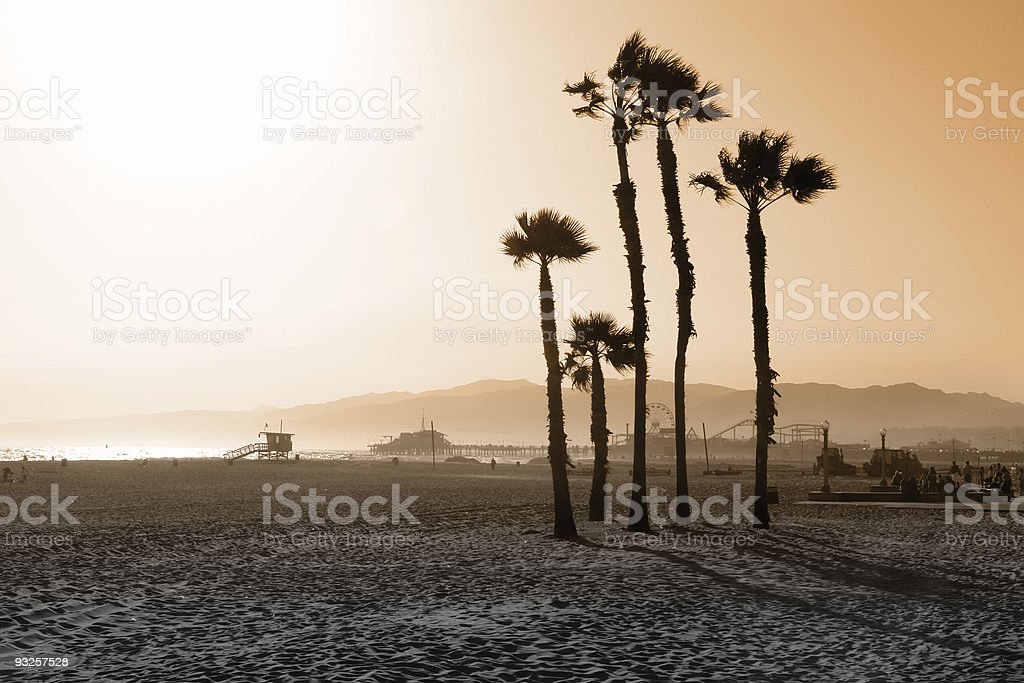 Santa Monica Beach Palms royalty-free stock photo