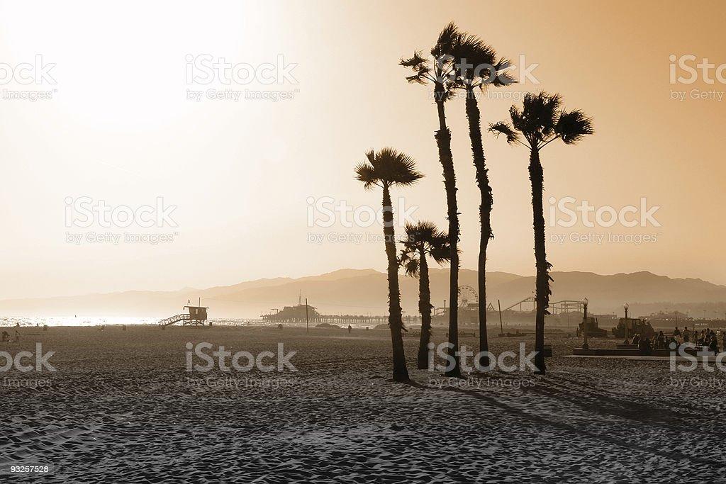 Santa Monica Beach Palms stock photo