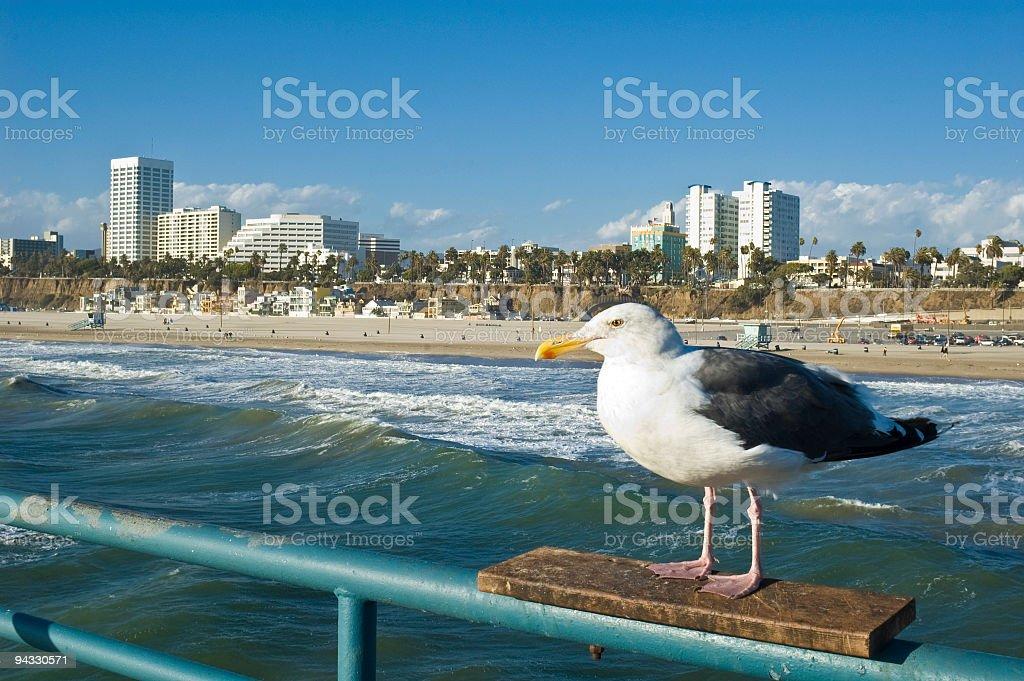 Santa Monica resident stock photo