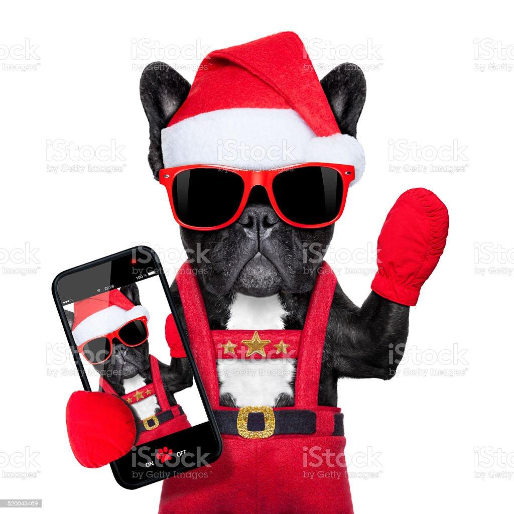 santa selfie dog stock photo