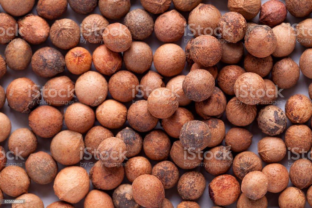 Santalum album (Indian sandalwood) seed stock photo