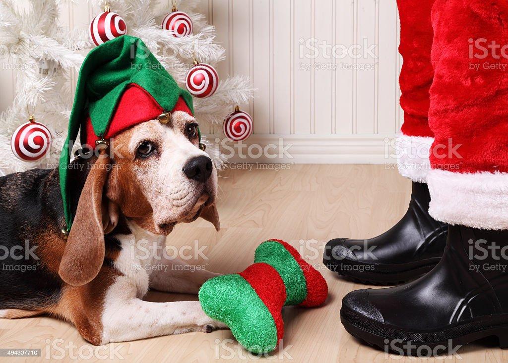Santa's Assistant stock photo