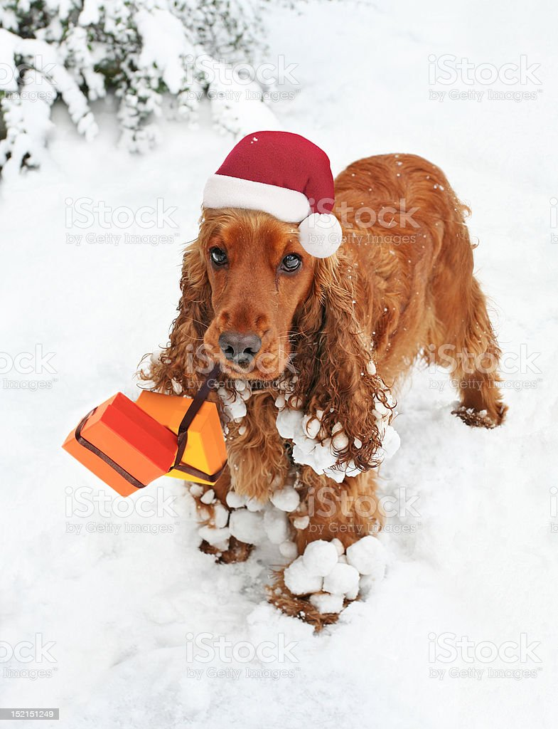 Santas Little Helper royalty-free stock photo