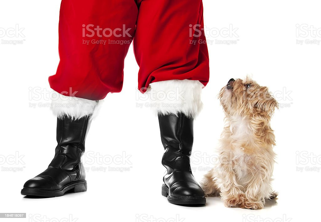 Santa's Pet stock photo
