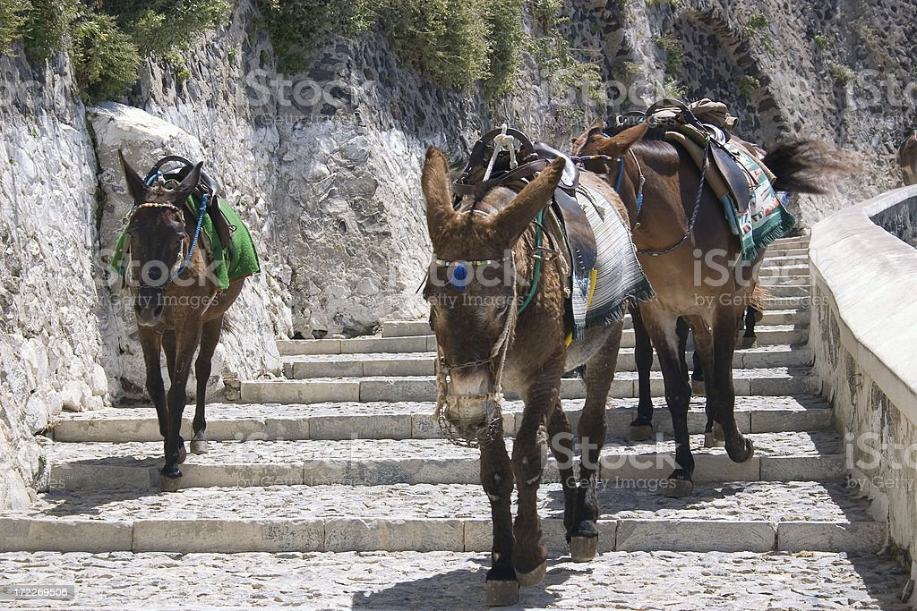 Santorini Donkey royalty-free stock photo